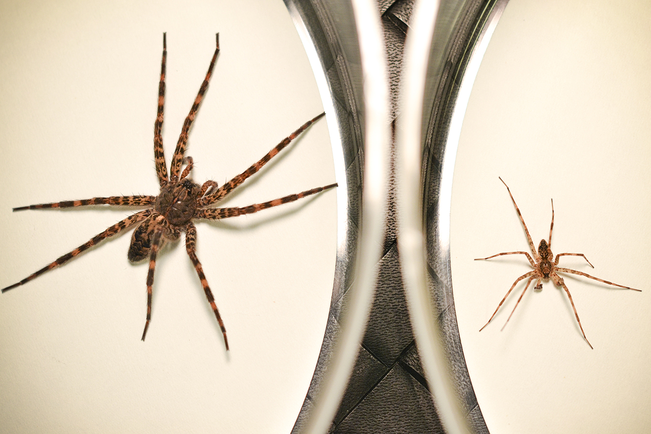 Genital mutilation, cannibalism part of spider's mating ...