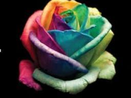 Rainbow Ball Flier