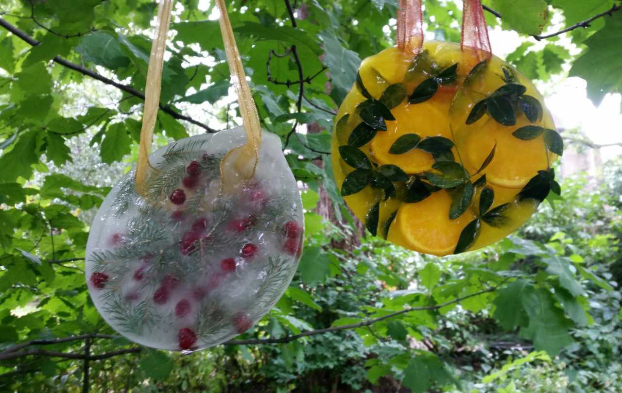 This winter-themed ice suncatcher (left) has raspberries and spruce branches. This fall-themed ice suncatcher (right) has orange slices, vinca stems and yellow food coloring. (Photo by Mary Jane Frogge, Nebraska Extension in Lancaster County)