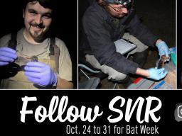 Bat Week