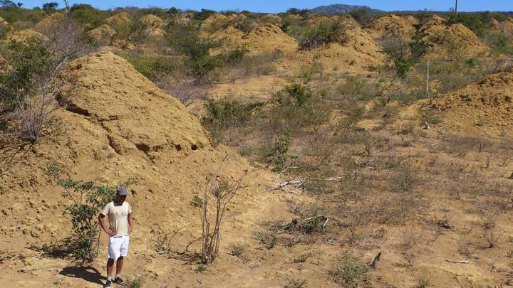 The termite mounds | Image courtesy Roy Runch