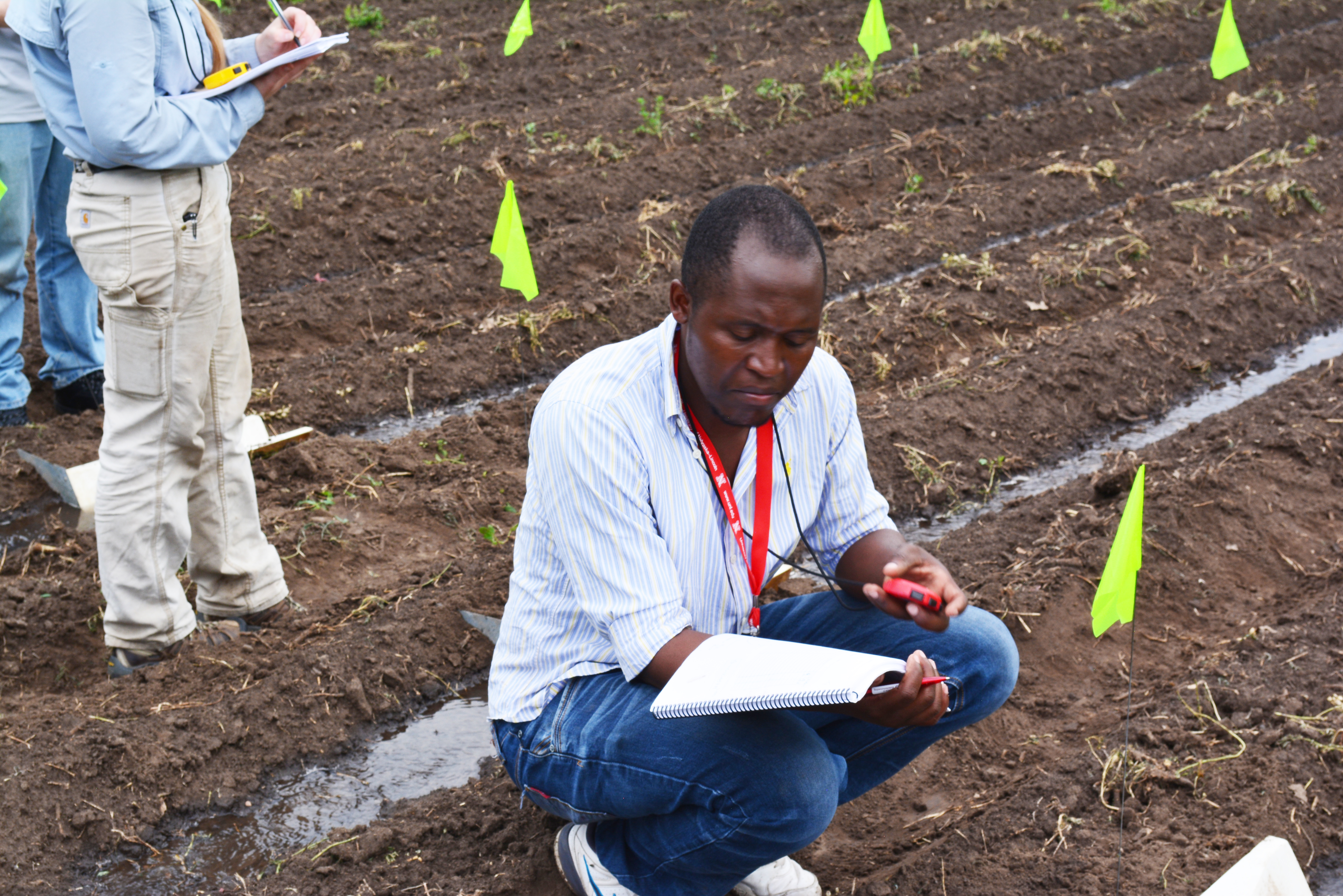 UNL graduate student Mavuto Banda from Malawi conducts a field experiment on irrigation water flow.
