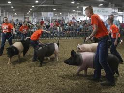 (Photo by Vicki Jedlicka, Nebraska Extension in Lancaster County)