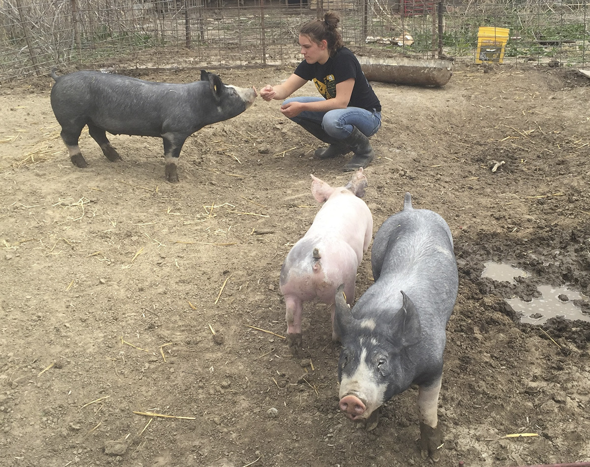 Pick-A-Pig club member at Harry Muhlbach's farm, where the pigs for the club are kept.