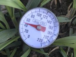 Soil temperature can be measured using an inexpensive thermometer. (Photo by Tyler Williams, Nebraska Extension in Lancaster County)
