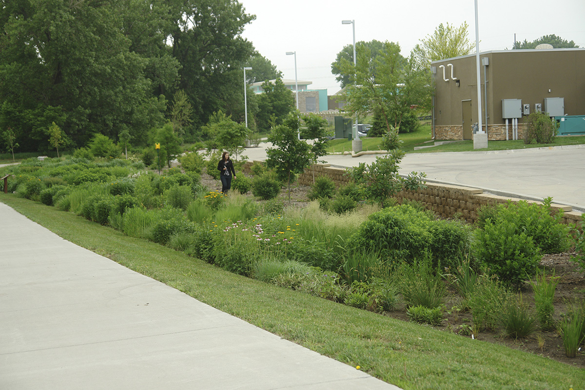 Fireworks restaurant bioswale in Lincoln captures stormwater from adjacent parking lots and buildings absorbing excess runoff, filtering pollutants and creating habitat for birds and insects. (Photo courtesy of Nebraska Statewide Arboretum, plantnebraska)