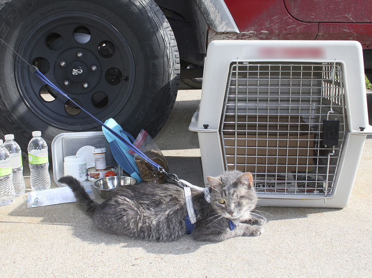 Practice your evacuation plan with your pet(s) before you are faced with a crisis. (Photo by Vicki Jedlicka, Nebraska Extension in Lancaster County)