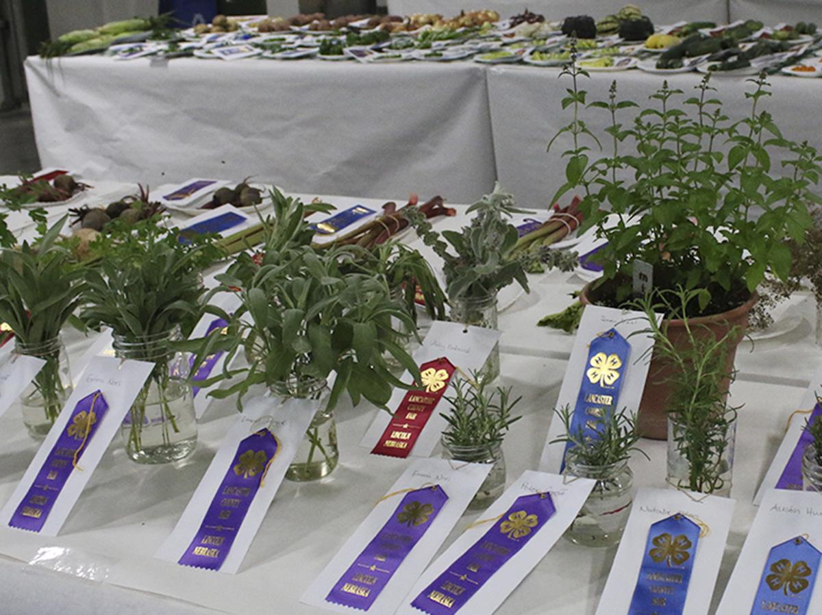Horticulture projects at fair.jpg