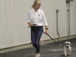 A member of the 4 On The Floor dog 4-H club for youth ages 9-18.