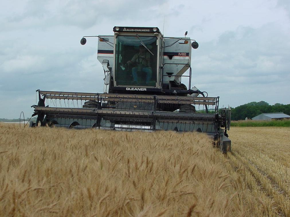 A combine rolls through a Nebraska wheat field.