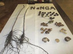 Seedlings to nuts.jpg