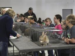 2019 4-H Spring Rabbit Show
