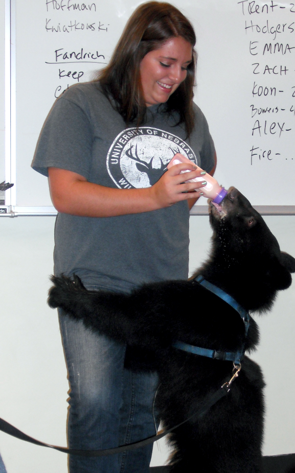 A student from the UNL Wildlife Club feeds a black bear during a visit from Wildlife Encounters last year.