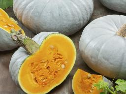 Pumpkin  'Blue Prince' (Photo courtesy of All-America Selections)