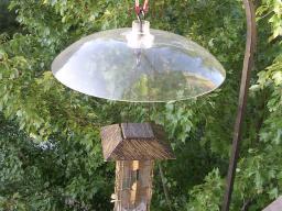 Bird feeder with squirrel baffle (Photo by Rusty Tanton, flickr.com)