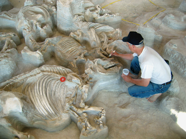 Gregory Brown works in the Hubbard Rhino Barn at Ashfall Fossil Beds State Historical Park.