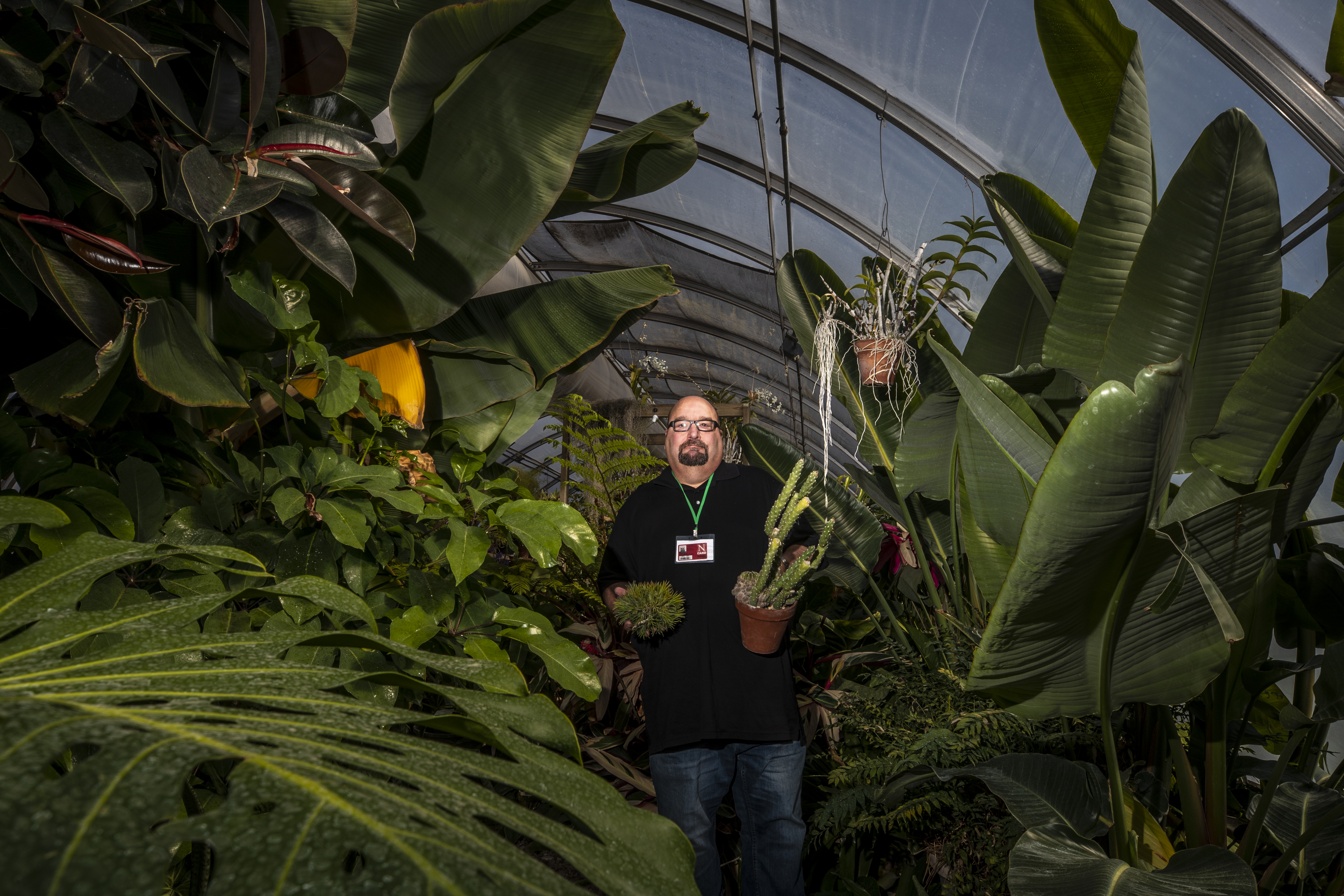 """Jeff Witkowski, greenhouse manager for Agricultural Research Division, holds a couple of his favorite specimens in the East Campus """"jungle."""" Craig Chandler, University Communication"""