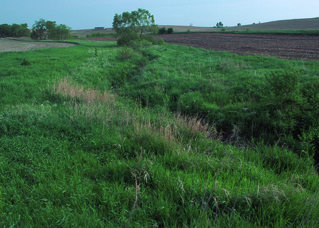 In Sarpy County, filter strips in concert with terraces limit sediment from reaching an adjacent waterway. Graduate students can study these methods by specializing in Conservation Agriculture at the University of Nebraska-Lincoln. Bob Nichols, USDA