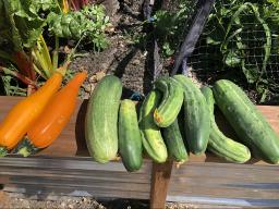 Growing together cucumber squash1200.jpg