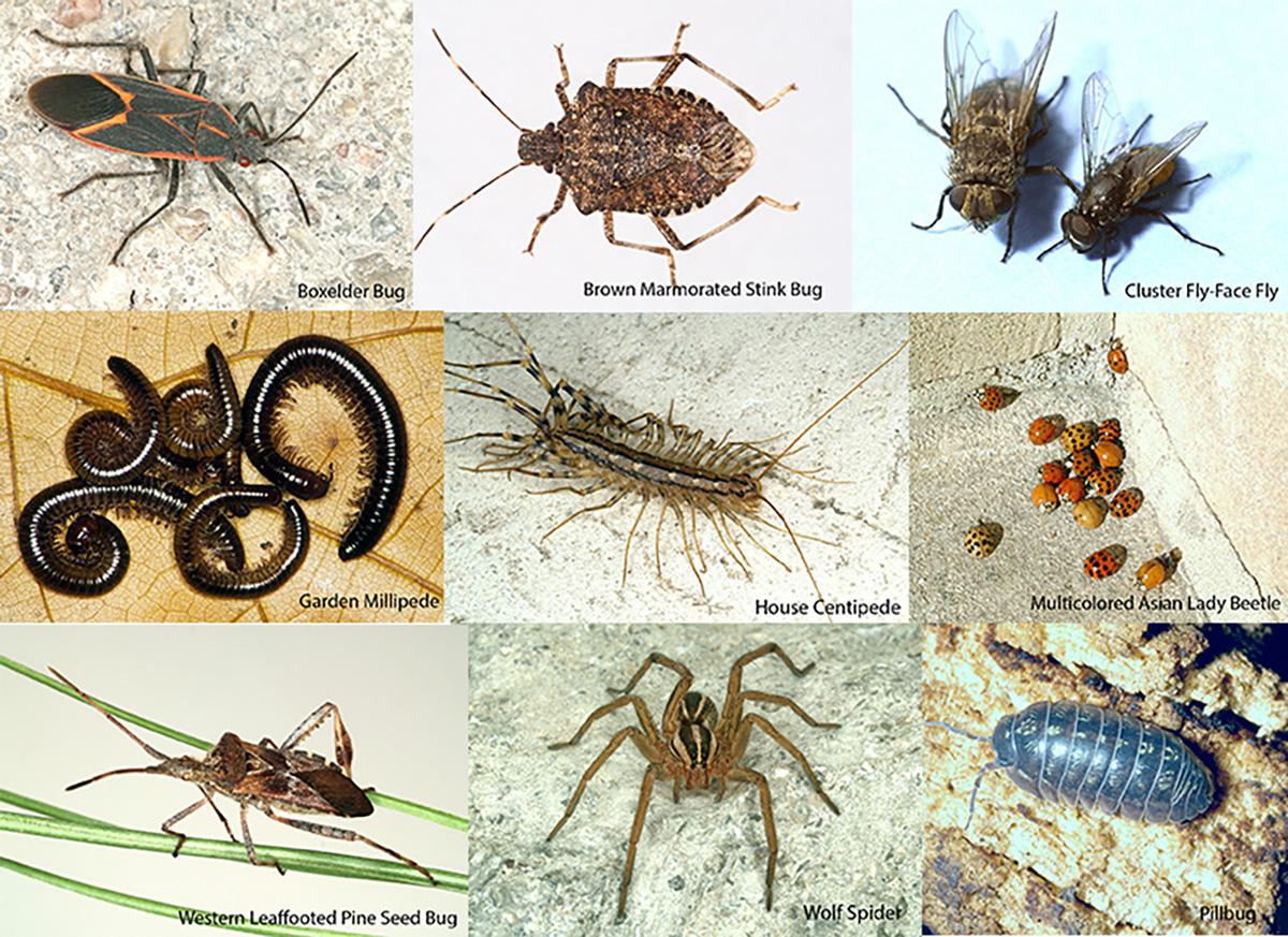 (Photos: UNL Department of Entomology)
