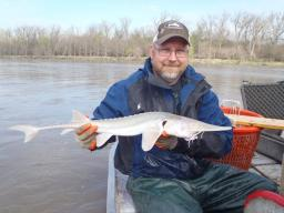 Nebraska's Mark Pegg holds a pallid sturgeon. The long-lived species, whose ancestry stretches back about 70 million years, was classified as endangered in 1990. Courtesy