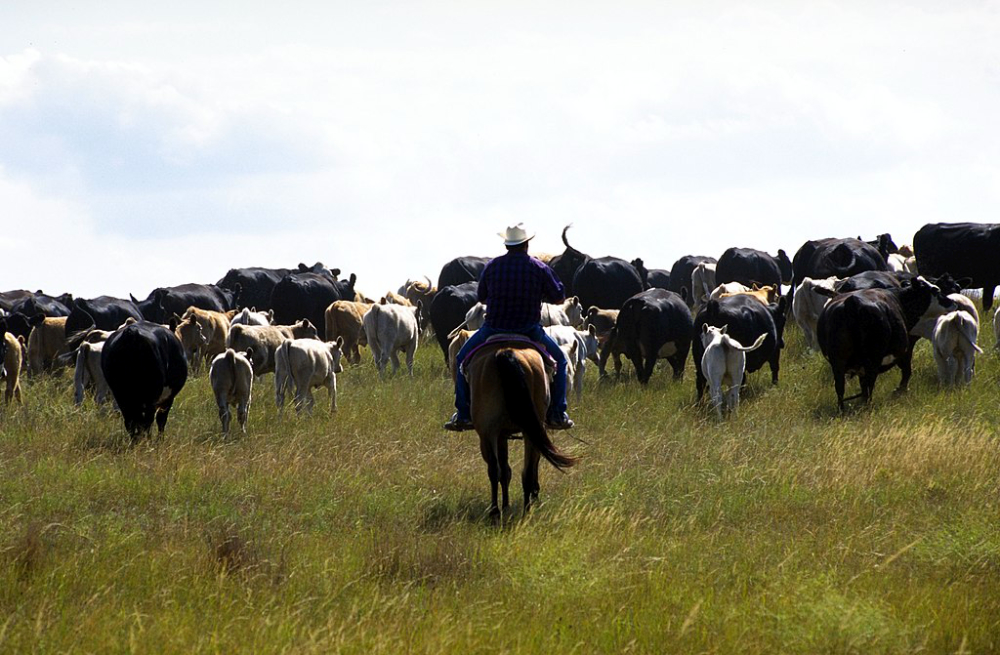 The journal Rangeland and Ecological Management recently published an article detailing the results of a survey of western South Dakota ranchers who endured a 2016 flash drought that significantly altered forage production. USDA NRCS South Dakota