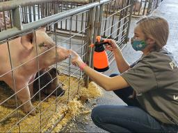A Pick-a-Pig 4-H club member at the 2020 Lancaster County Super Fair