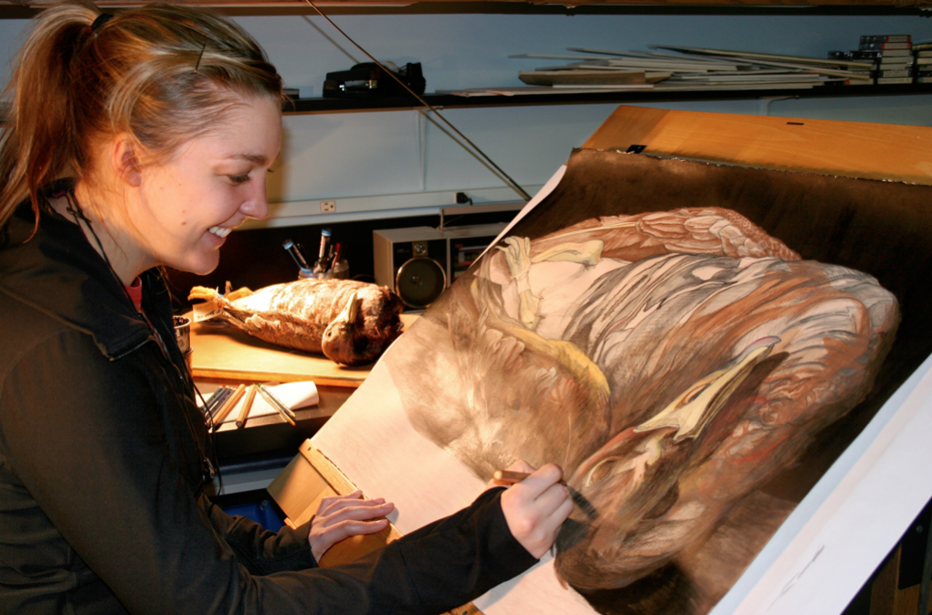 Audrey Stommes paints a goose from the University of Nebraska State Museum's Division of Zoology.