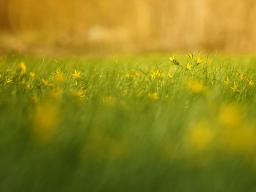 grassy field1200.jpg