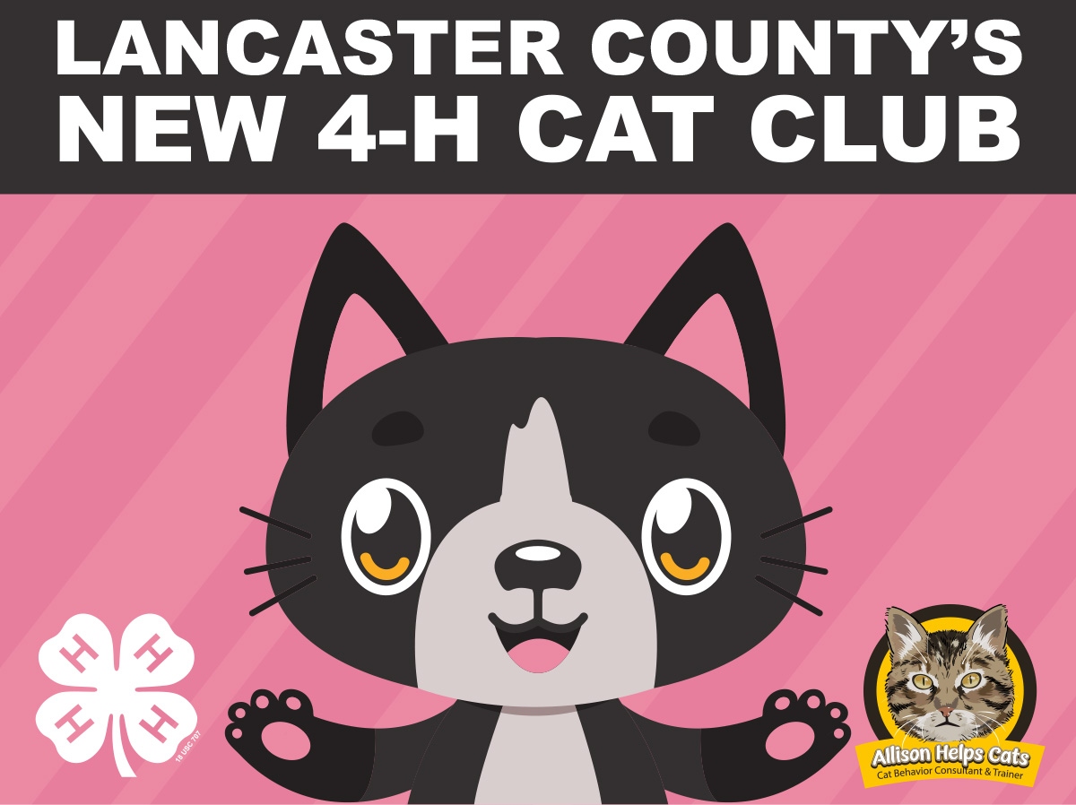 Cat Club Flyer 21 graphic only.jpg