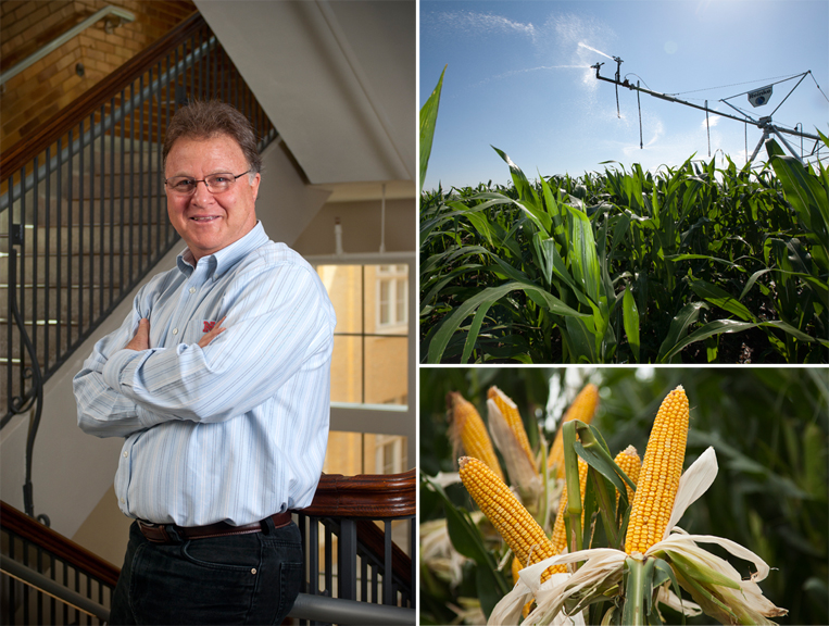 Research led by UNL's Ken Cassman (pictured) and Patricio Grassini shows that irrigated corn grown in Nebraska is highly efficient in the use of energy, water and fertilizer.