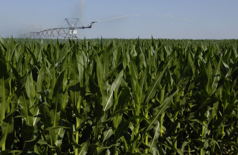 Crop production is part of the Nebraska ag production complex, and is key to the state's economy, accordint to the new study.