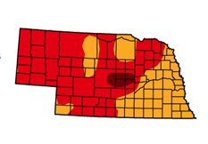UNL Extension's drought resources website includes information from the U.S. Drought Monitor. Currently, the drought monitor indicates moderate to extreme drought for all of Nebraska.