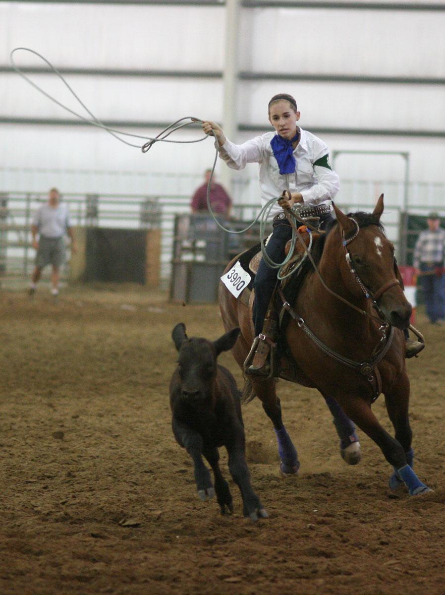 Horse Roping Clinics Nov 11 Amp 18 Announce University