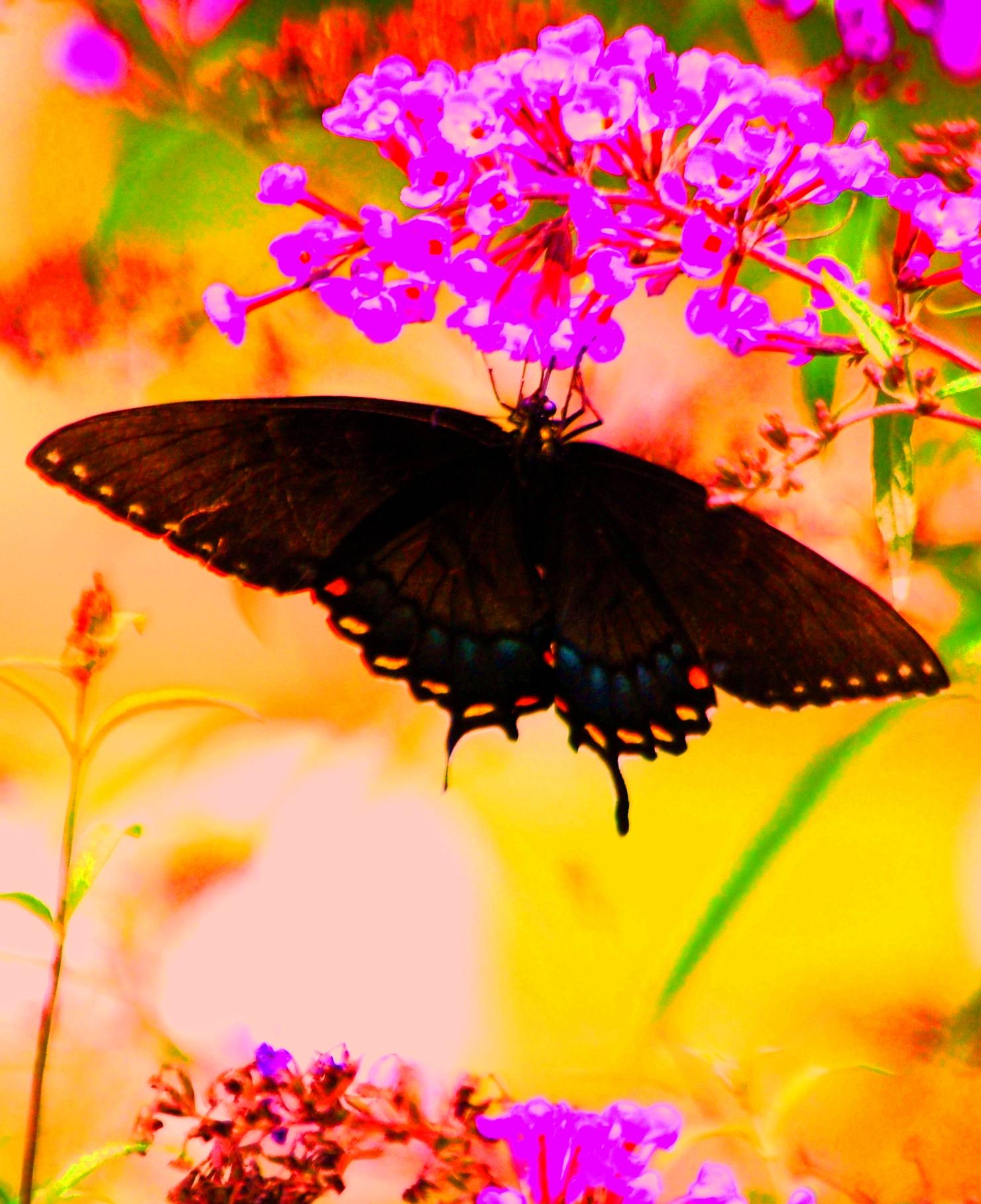 Swallowtail/Valerie Bender