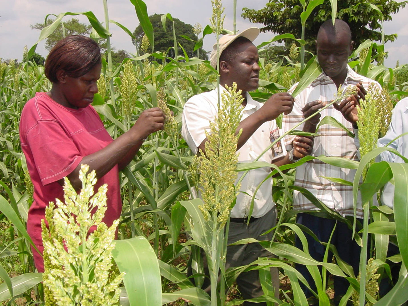 A team led by Kayuki Kaizzi (center) conducted research to determine 15 crop-nutrient response functions, which were then integrated by UNL collaborators into the Uganda Fertilizer Optimization tool.