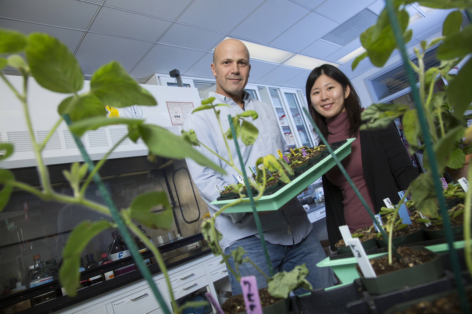 Jim Alfano (left) and graduate student Anna Joe inspect plants in the lab.