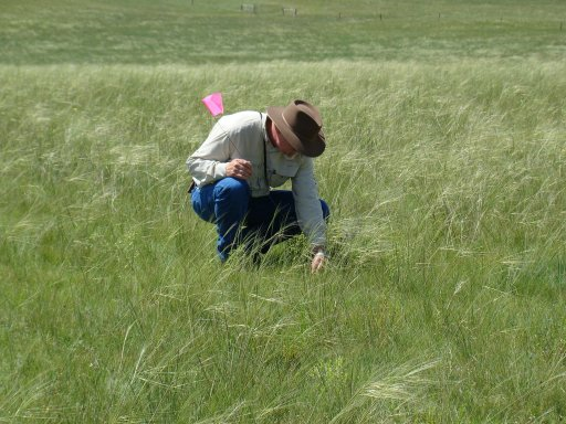 Monitor your rangeland to determine proper stocking rates. Photo courtesy of Aaron Berger.