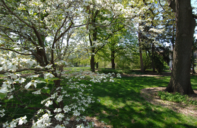 1005_Arboretum.jpg