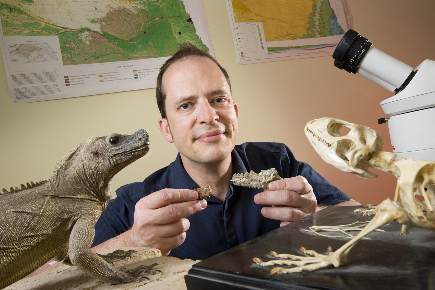 Jason Head, assistant professor of Earth and Atmospheric Sciences, holds a fossil and fossil cast from the jawbone of Barbaturex morrisoni, a giant ancient lizard. (Craig Chandler, University Communications)