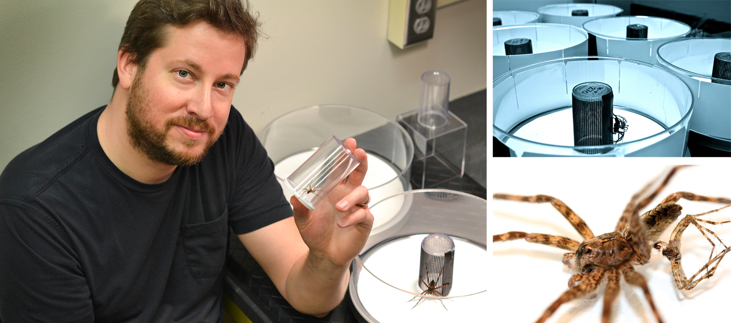 Steven Schwartz, a post-doctoral researcher, discovered that the mating habits of dark fishing spiders include both cannibalism and male self-sacrifice.