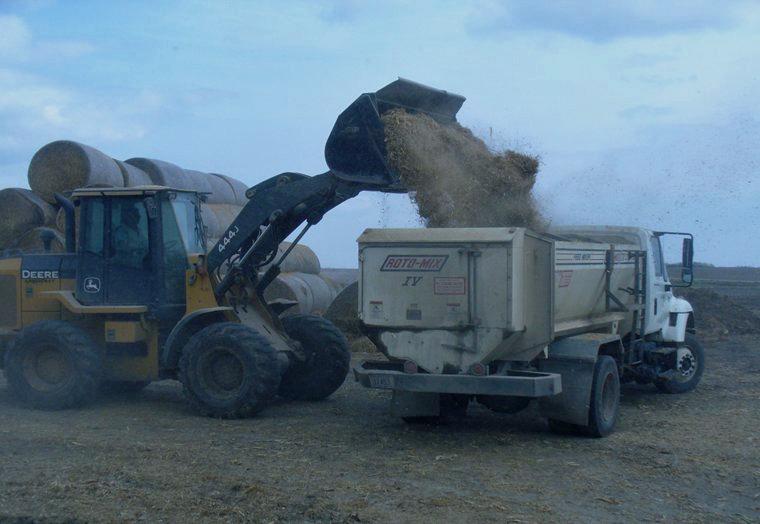 Calcium oxide treated forage.  Photo courtesy of Matt Luebbe