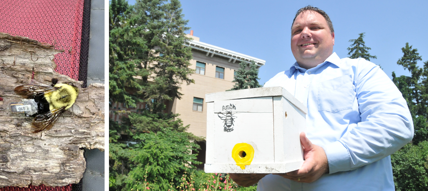 Entomology professors, including Doug Golick, are working on a project that will train high school students how to track bumblebee queens.
