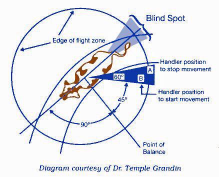 Figure 1: Flight zone.