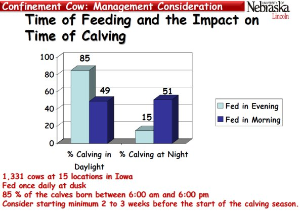 This graph depicts the impact of when feeding occurs during the day and when calving occurs over a 24 hour period.