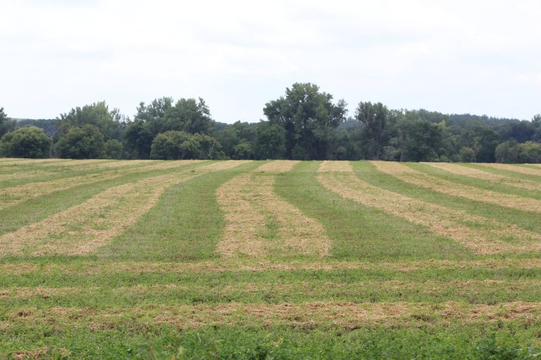 Last summer's weather caused much hay to be baled too wet or silage chopped too dry. Photo courtesy of Troy Walz.