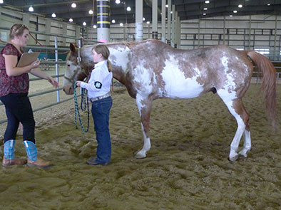 4-H Horsemanship Level Testings, April 15 & 29 | Announce ...