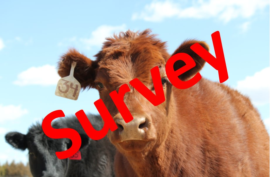 We would appreciate your feedback on the UNL Extension Beef survey.