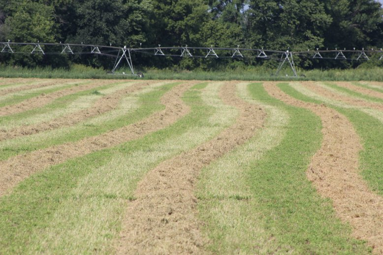 Temperature, humidity, wind speed, and soil moisture content all are important, but solar radiation has the greatest impact on drying rate.  Photo courtesy of Troy Walz.