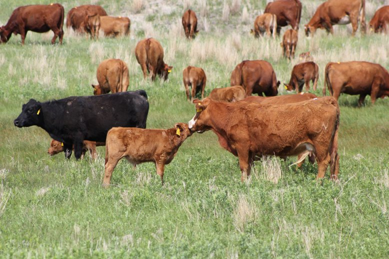 The average rental rates per month for cow-calf pairs are about 20 to 25 percent higher in 2014 compared to 2013.